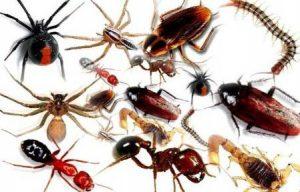 dich vu diet con trung 300x192 - Dịch vụ diệt côn trùng giá rẻ an toàn