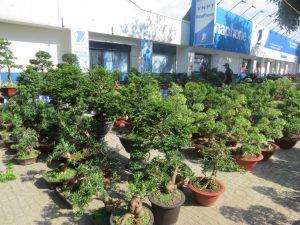 dich vu trong cay 300x225 - Dịch vụ trồng cây cảnh tại TP HCM